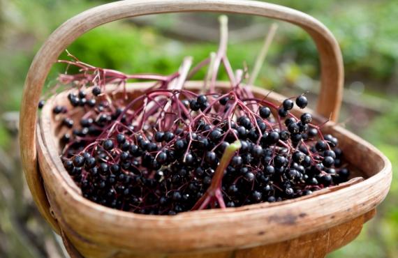 The Power of Prevention: Elderberry Etc…
